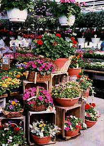 Visit our large greenhouses year round for all your garden and garden supply needs-Gro Moore Farms in Henrietta, NY.