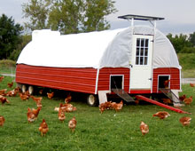 Portable, solar powered hen house allows new range for cage free chickens, resulting in delicious farm fresh eggs at Gro-Moore Farms, Henrietta, New York