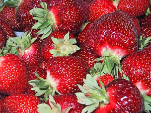 Pick your own and fresh picked, locally grown strawberries at Gro Moore Farms in Rush and Henrietta, NY